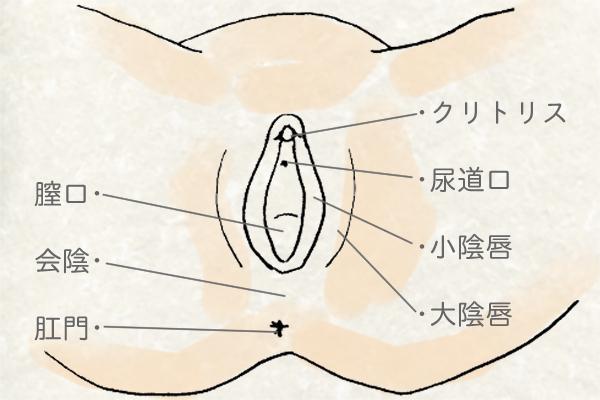 デリケートゾーンの洗い方-女性のデリケートゾーン
